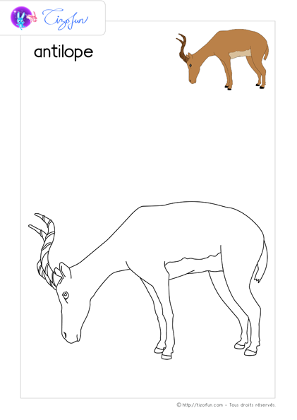 coloriage-animaux-sauvages-dessin-antilope