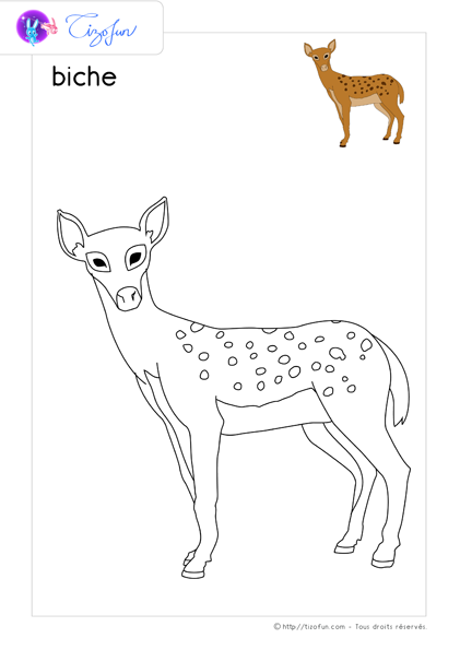 coloriage-animaux-sauvages-dessin-biche-02