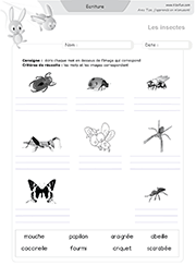 ecriture-animaux-insectes